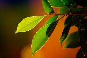 orange background macro plants nature bokeh leaves