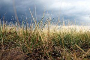 outdoors field clouds grass plants