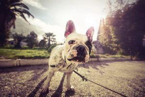 outdoors sunlight dog animals