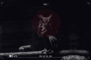owl digital art animals birds