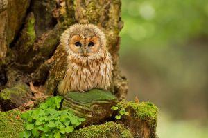 owl trees birds animals