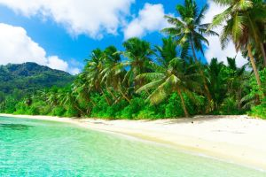 palm trees beach tropical sand