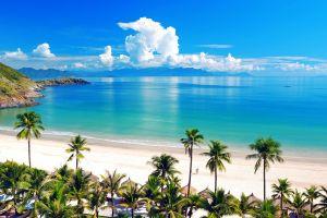 palm trees beach tropical