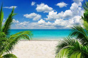 palm trees horizon beach sky sand tropical