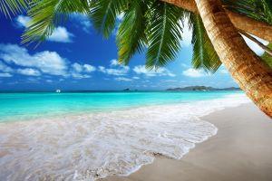 palm trees sea tropical beach