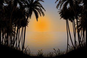 palm trees sun sea