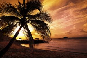 palm trees sunset sunlight nature landscape beach