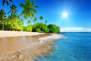 palm trees tropical beach