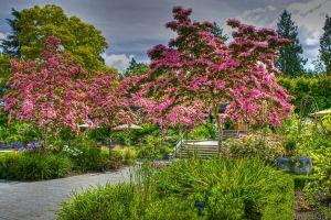 park plants trees garden