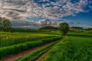 pathway field sky nature clouds landscape