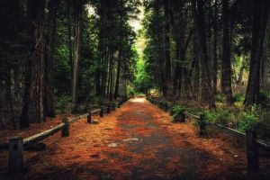 pathway forest nature