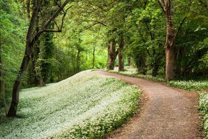 pathway wood plants trees forest foliage flowers