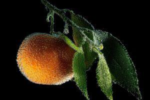 peaches macro water drops