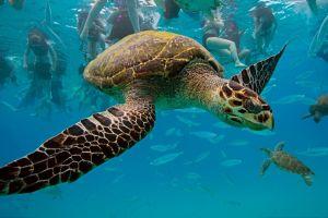 people underwater turtle sea animals