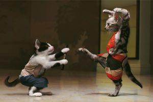 photo manipulation humor ninjas kung fu cats