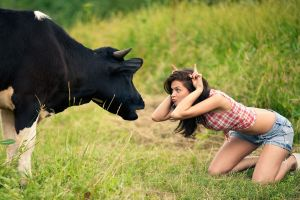 plaid jean shorts women cow fingers plaid shirt humor