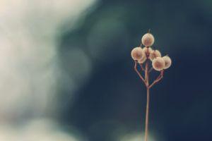 plants berries macro