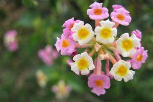 plants colorful bokeh flowers macro macro