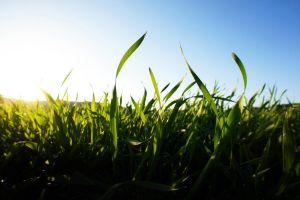 plants field outdoors