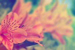 plants flowers outdoors macro