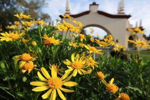 plants flowers yellow flowers