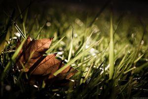 plants grass leaves