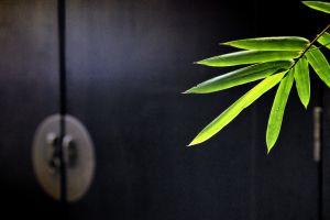 plants leaves macro
