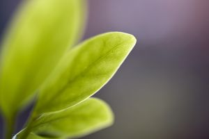 plants macro leaves blurred