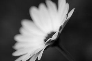 plants macro monochrome flowers