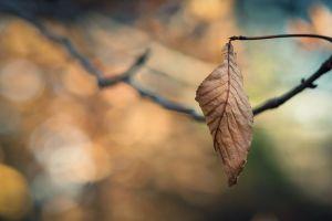 plants macro nature leaves