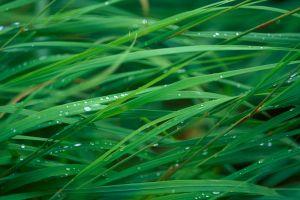 plants macro water drops grass