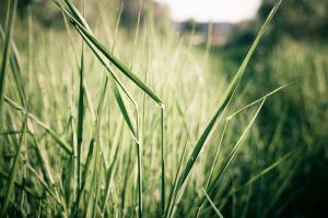 plants nature grass