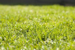 plants nature green grass