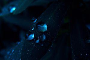 plants nature water drops macro