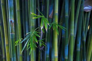 plants photography bamboo nature leaves