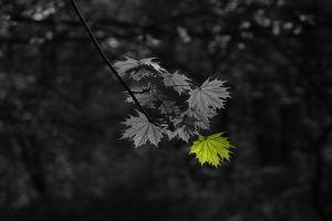 plants selective coloring leaves monochrome
