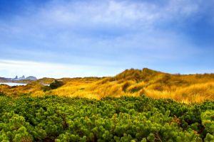 plants sky landscape nature