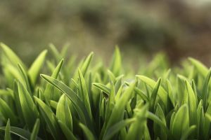 plants spring nature grass leaves
