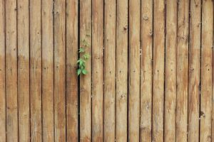 plants wooden surface wood leaves spring