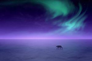 polar bears horizon animals snow landscape sky
