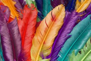 purple colorful red turquise macro feathers orange