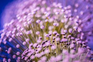 purple flowers macro flowers