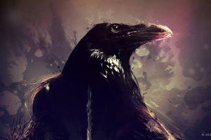 raven animals birds artwork