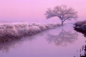 reflection mist landscape winter nature trees river
