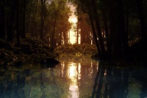 reflection sunset water trees lake nature forest