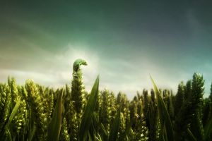 reptiles green animals photo manipulation gecko plants depth of field