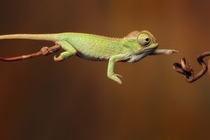 reptiles side view animals jumping chameleons