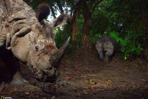 rhino animals national geographic