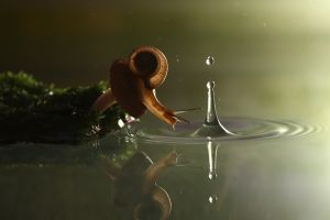 ripples nature reflection water drops splashes snail