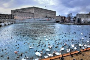 river cityscape animals stockholm sweden